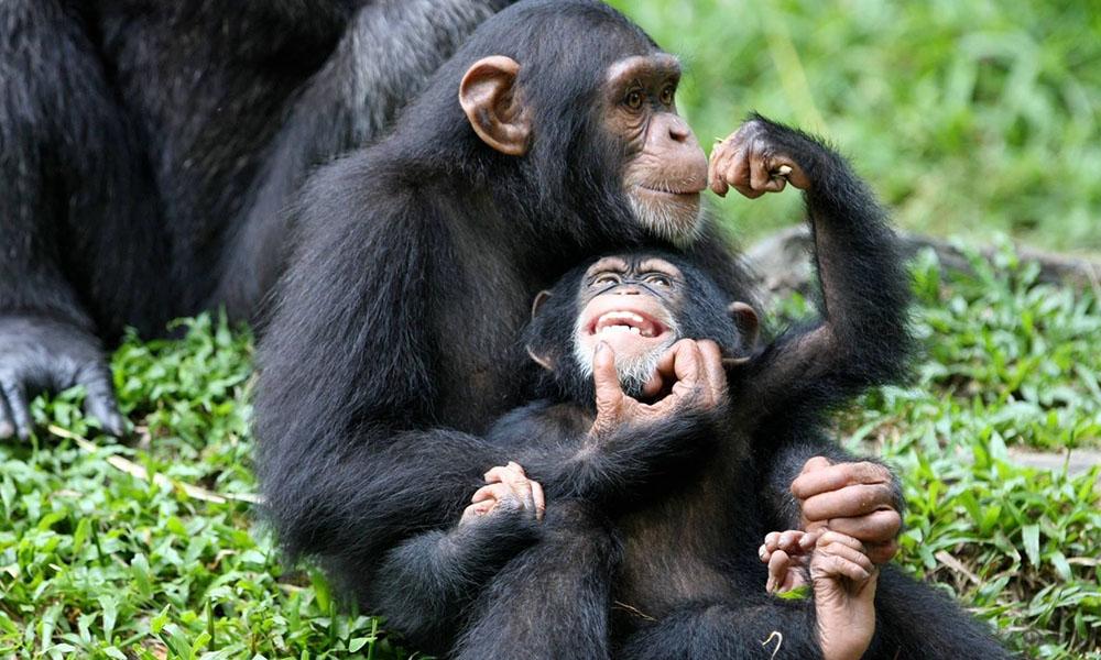 8 Days Rwanda Safari Tour