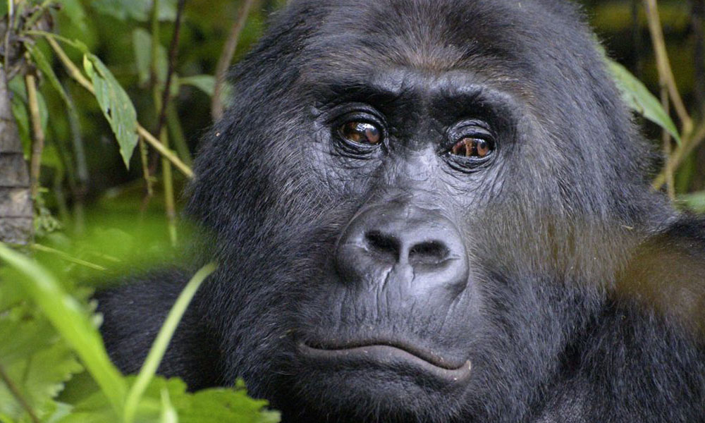 10 Days Gorilla Trekking Safari