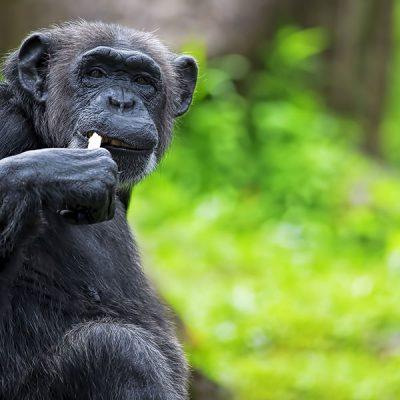 7 Days Rwanda Wildlife Safari