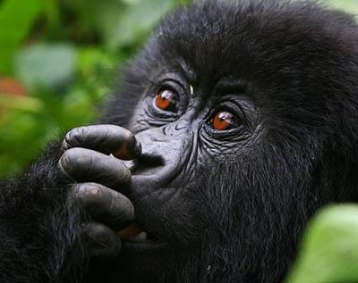1 day rwanda