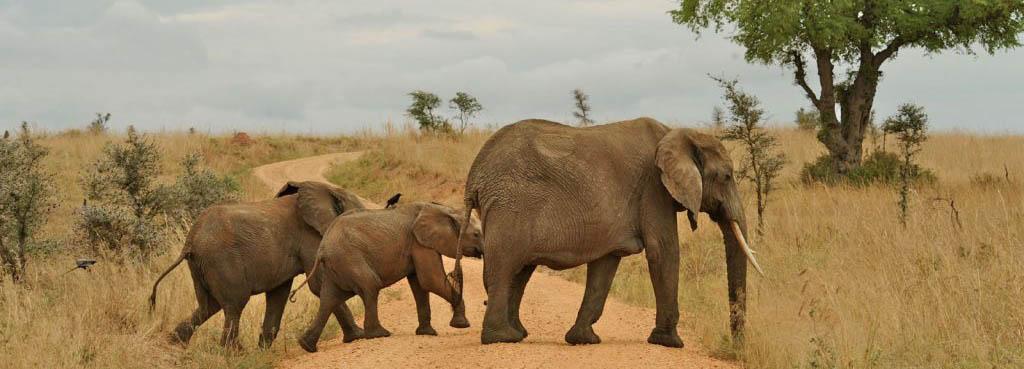 10 Days Gorilla and Culture Safari in Rwanda and Uganda