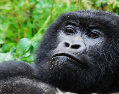 7 Days Uganda Rwanda Gorilla and Cultural Safari