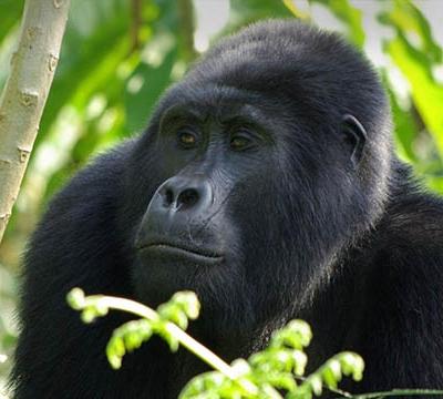 9 Days Rwanda Primates and Cultural Tour