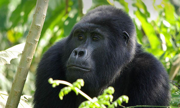 9 Days Rwanda Primates and Cultural Tour