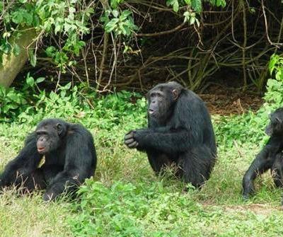 4 Days Queen Elizabeth and Ngamba Chimp Sanctuary Visit