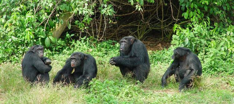 4 Days Queen Elizabeth and Ngamba Chimp Sanctuary Visit