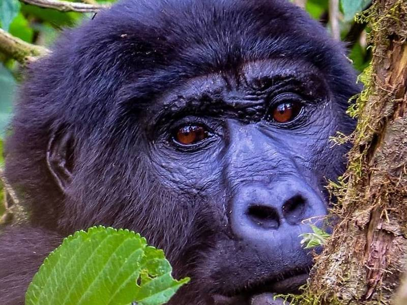 6 Day Safari to Queen Elizabeth, Bwindi and L. Bunyonyi