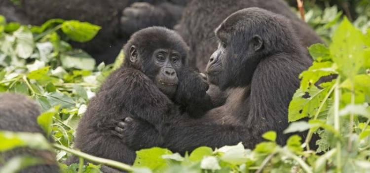 10 Day Best of Uganda's Wildlife