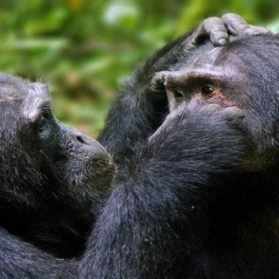 7 Days Queen Elizabeth and Primates Trekking