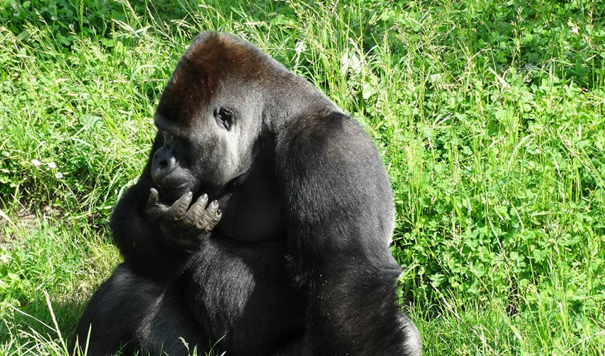 10 Things To Put Into Consideration Before Booking A Gorilla Safari In Uganda